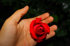 darkness and roses (adriannfrias) Tags: red rose dark village darkness gore flickrandroidapp:filter=none