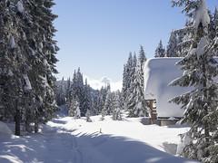 Enego2014_P2060869 copia (stegdino) Tags: wood winter snow framed cottage hut neve chalet thumbsup inverno bosco baita malga gamewinner challengeyouwinner grangia yourockwinner herowinner storybookwinner 114picturesin2014 msh0214 msh021414 365the2014edition3652014day3706022014