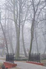 misty park...   (2 photos) (green_lover) Tags: park morning bridge trees mist fog poland yrardw