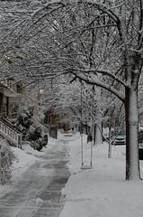 Snow-7912