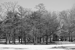 Trees Corona Park (pietkus) Tags: wood newyork nature blackwhite queens flushing sonyalpha slta77v