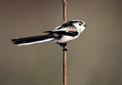 Quick Ltt visit (niknok2007...) Tags: wild bird nature wildlife yorkshire ltt hatfieldmoors niknok2007 nicolaratcliffe