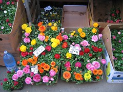 flowers market (SOCIAL FLO MEMORY ALIVE) Tags: architecture cities romania bucharest digitalphotography floart streetsofbucharest