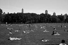 green (Nadia Zaboura) Tags: leica newyorkcity blackandwhite bw newyork 35mm centralpark lawn n m8 sunbathers f20 leicam8