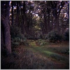 diana_cur.spit_rdpII_a (slavsja) Tags: trees film clouds forest lomography dune baltic diana fujifilm provia curonianspit curonian rdpii forestryroad lesnoye