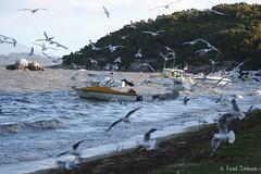 Beams (Paul Verlaine) (Polovergnat) Tags: mer beams australie verlaine mouettes enversetcontretout polovergnat yanackie