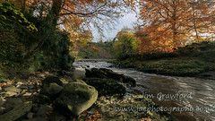 River Roe in it's Autumn  glory (jac.photography49) Tags:
