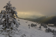 Ascenso a la Cima de Navacerrada (Zamana Underground) Tags: madrid trees winter snow color blanco forest landscape pentax path nieve paisaje fir montaña senderismo snowscape winterscape ascenso navacerrada k5iis