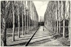          i        (Heinrich Plum) Tags: trees white black berlin monochrome blackwhite fuji candid plum streetphotography parkway monochrom avenue schwarzweiss bume allee treptowerpark streetphotographie xe2 heinrichplum xf1855mm