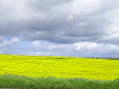 OIL SEEDRAPE IN COLOUR (Monkiiiey Henry Clark) Tags: colour oil in seedrape