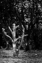 Condemned (Explored 19/5/16) (timh255) Tags: tree monochrome blackwhite condemned nikon gloucestershire explore gloucester lightroom 52weeks d5200 timhutchinson