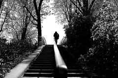 Along the banister (pascalcolin1) Tags: trees blackandwhite paris garden noiretblanc jardin arbres staircase banister bercy escalier streetview rampe photoderue urbanarte photopascalcolin