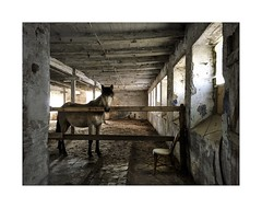 Sad horse (Jan Dobrovsky) Tags: horse color backlight contrast rural countryside sad grain stable countrylife iphone