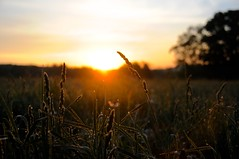 Sunrise (T.Bell Photography) Tags: trip morning school trees friends light sunset camp sky orange sun color field grass sunrise landscape outdoors photography nikon natural outdoor wheat earlymorning meadow nh fieldtrip marlboro photograh schooltrip glenbrook nikond300 campglenbrook marlboronh