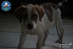 DSC08194 (OrgNicAmb) Tags: dogs perros nicaragua refugio mascotas masaya peluditos recataditos casahogarlucito orgnicamb