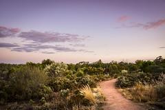 Kings Billabong Park (phunnyfotos) Tags: park light sunset twilight bush nikon track dusk path australia victoria d750 vic billabong mildura walkingtrack bushland kingsbillabong irymple nichollspoint phunnyfotos nikond750 kingsbillabongpark