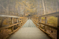 A bridge on a foggy day (atitsince82) Tags: california wood bridge red tree philadelphia leaves yellow fog forest landscape hotel wooden foggy rail hike grill lobby made trail jungle twig marsh railing manufactured