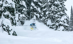 Bliss (Last Frontier Heliskiing) Tags: trees mountains nature forest outdoors skiing backcountry offpiste heliskiing lastfrontierheliskiing