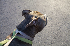 louie (NatalieShockleePhotography) Tags: color colors spring bright springtime