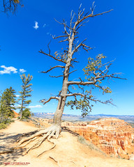 The Rim Trail - Bryce Canyon National Park (mikerhicks) Tags: travel arizona usa southwest nature landscape geotagged outdoors photography utah spring unitedstates desert hiking adventure event backpacking bryce brycecanyon marblecanyon brycecanyonnationalpark onemile therimtrail geo:country=unitedstates geo:state=utah camera:make=canon exif:make=canon tokinaatxprosd1116f28ifdx exif:lens=1116mm exif:aperture=28 geo:city=bryce exif:isospeed=100 exif:focallength=11mm canoneos7dmkii camera:model=canoneos7dmarkii exif:model=canoneos7dmarkii geo:lat=3762682500 geo:lon=11216498500 geo:lon=112164985 geo:lat=37626825 geo:location=brycecanyon