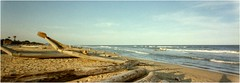 Catamarans  Thiruvanmiyur - Tamil Nadu - Inde 1995 (JJ_REY) Tags: india beach boats kodak panoramic bateaux plage fishermens tamilnadu southindia quicksnap pcheurs thiruvanmiyur indedusud