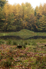 20101101 Gulke putten 102 klein.jpg (henk.wallays) Tags: macro nature closeup landscapes europa belgium wildlife natuur location size aaaa vlaanderen oostvlaanderen ruiselede gulkeputten henkwallays pdpublishsmall