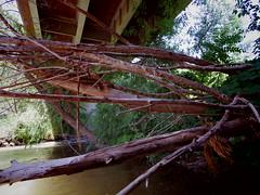 Under the Tuzigoot Bridge (EllenJo) Tags: arizona river pentax tube raft verderiver riparian sundayafternoon june5 clarkdale 2016 ellenjo summerinarizona ellenjoroberts tuzigootbridge tuzirap pentaxqs1 cruisingdowntheriveronasundayafternoon