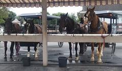 20160624_161540 (joyannmadd) Tags: amish buggy ride intercoursew pennsylvania farm kitchenkettlevillage lancaster pa