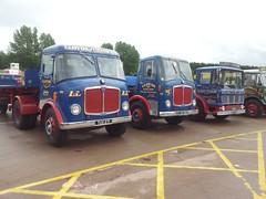 Lloyds of Ludlow lineup (quicksilver coaches) Tags: ludlow lloyds gaydon aec jae816d tux271 xnp793m