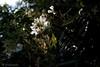 CRW_8435 (kisugi802) Tags: eosd60 2016 長居植物園 20160618
