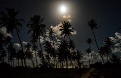 Moonlight On Palms (Jorge Hamilton) Tags: bahia brasil brazil praia do forte arco ris rainbow lua luar farol beach moolight jorgehamilton brandao brando