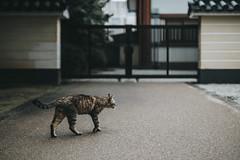 (Cat Zheng) Tags: travel japan 35mm fujifilm nara kansai 18mm f095  2016 xseries mitakon xpro2 1650mm xf18 xc1655