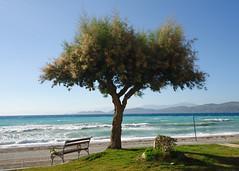 ~ Kalamia Beach (Argyro...) Tags: sea summer tree beach water bench landscape seaside corinth greece
