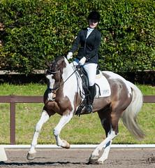 160703_YR_Champs_5185.jpg (FranzVenhaus) Tags: horses performance sydney australia competition event nsw athletes aus equestrian riders dressage siec