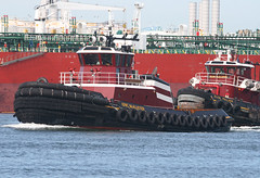ERIC McALLISTER & ELLEN McALLISTER in New York, USA. June, 2016 (Tom Turner - SeaTeamImages / AirTeamImages) Tags: nyc red usa newyork port harbor twins marine couple unitedstates harbour duo pair transport vessel spot pony maritime transportation tug statenisland bigapple channel spotting waterway tugboats vessels mcallister kvk tomturner killvankull ellenmcallister ericmcallister