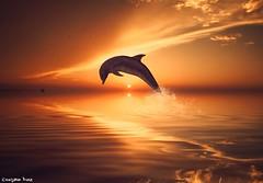 The happiness (gusdiaz) Tags: vsco vscocam dolphin reflection atardecer alborada splash water beach summer ocean sun beautiufl verano delfin reflejo agua playa mar arena photoshop photomanipulation digital art arte surreal
