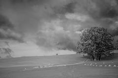 Monde Gris (PaxaMik) Tags: winter snow ski clouds grey gris noir noiretblanc hiver silhouettes neige nuages arbre skidefond mlancolie nb plateauderetord arbredhiver paysagedeneige