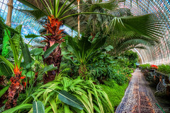 Palm in the Palm house (Miroslav Petrasko (blog.hdrshooter.net)) Tags: sky house green glass clouds canon republic czech tripod sigma palm 1020mm domes hdr republika ceska lednice photomatix 450d theodevil hdrshooter