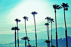 Layers in the Background (Art4TheGlryOfGod) Tags: california sunset santamonica hills palmtrees layers