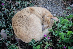Today's Cat@2013-05-17 (masatsu) Tags: cat canon catspotting thebiggestgroupwithonlycats powershots95