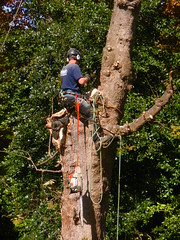 Tree Surgeon 004 (NikWatt) Tags: trees people scotland nikon edinburgh forestry coolpix handheld churchofscotland greatcolors treesurgeon greatscots edinburghphotographers nikons9100