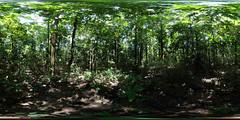 Réserve Tambopata
