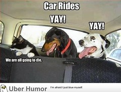 Car rides (4577246c1e1b7b419e88cca8ab7d2749) Tags: fun funny time native top lol humor waste stupidity uber stuppid