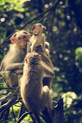 A Small Family (Ragavendran / Rags) Tags: trees wild tree nature animals forest mom monkey nikon dad branch wildlife branches monkeys curious tada littleone chennai andhra primate mothernature primates cautious familyaffair 70300 allinthefamily smallfamily d7000 asmallfamily ragavendran