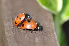 Summer Lovin (Greggybread) Tags: summer silly birds sex lady fun ride bugs hump humping lovin