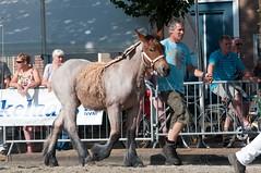 DSC_2238 (Ton van der Weerden) Tags: horses horse dutch de cheval belgian nederlands belges draft chevaux belgisch trait ijzendijke trekpaard trekpaarden epkevandeklaverhoevetoonkrol