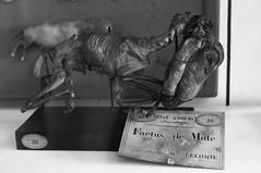 Foetus de mule (C18H25NO) Tags: death muse taxidermy mule fragonard foetus