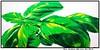 für HELA: BASILIKUM (CHRISTIAN DAMERIUS - KUNSTGALERIE HAMBURG) Tags: orange berlin rot silhouette modern strand deutschland see licht stillleben dock gesicht meer wasser foto fenster räume hamburg herbst felder wolken haus technik menschen container gelb stadt grün blau ufer hafen fluss landungsbrücken wald nordsee bäume ostsee spiegelung schwarz elbe horizont bilder schiffe ausstellung schleswigholstein figuren landschaften wellen häuser kräne rapsfelder fläche acrylbilder hamburgermichel realistisch nordart acrylmalerei expressionistisch acrylgemälde auftragsmalerei bilderwerk auftragsbilder kunstausschreibungen kunstwettbewerbe galerienhamburg auftragsmalereihamburg cdamerius hamburgerkünstler malereihamburg kunstgaleriehamburg galerieninhamburg acrylbilderhamburg virtuellegaleriehamburg acrylmalereihamburg