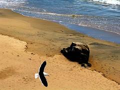 Volando (Cris Photos (Thanks for 1,5 Million views)) Tags: ocean chile sea naturaleza beach nature port puerto valparaiso mar playa oceano sudamerica
