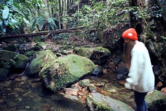 _ (LEAVES AND STICKS) Tags: winter mountain film wool hat 35mm rainforest stream wandering gully